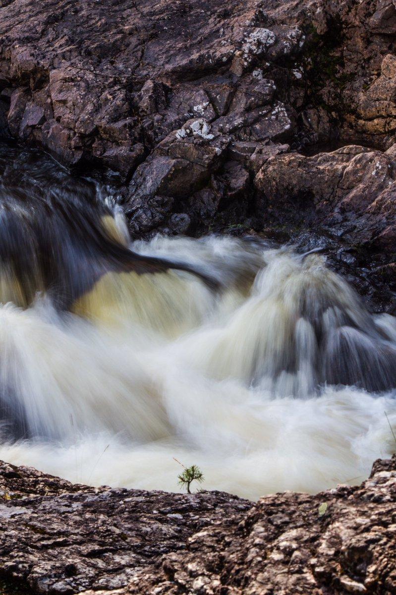 Modest Beginnings  #sapling #tree #river #rapids #kiutaköngäs #kuusamo #finland<br>http://pic.twitter.com/9PaiUlQ1cJ