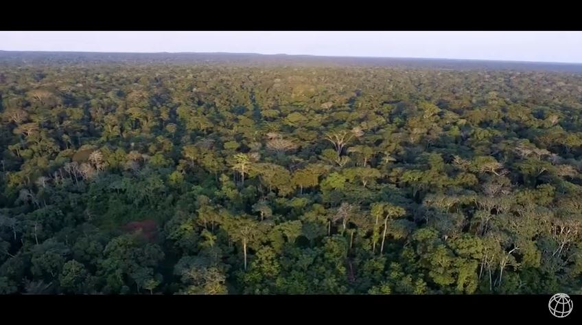 #DYK: In The Rep of Congo, #forests occupy 70% on nation's land, making it 2nd largest natural resource after oil:  http:// wrld.bg/cuKp30a7pba  &nbsp;  <br>http://pic.twitter.com/wVbldyhY5w