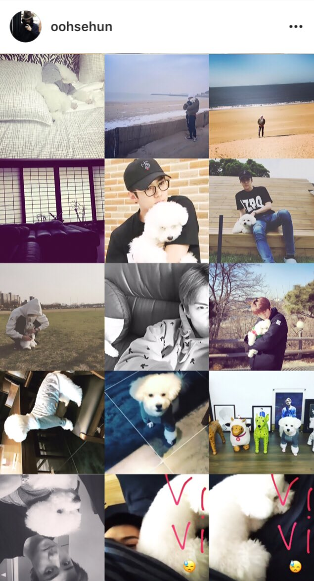 when almost 20% of sehun\'s instagram posts is all about vivi 💕