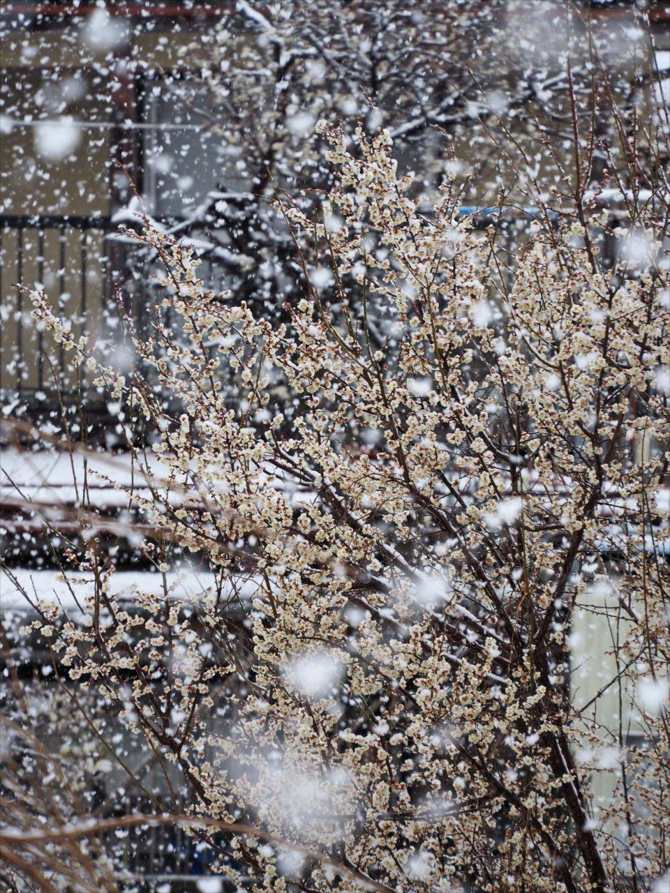 春のドカ雪