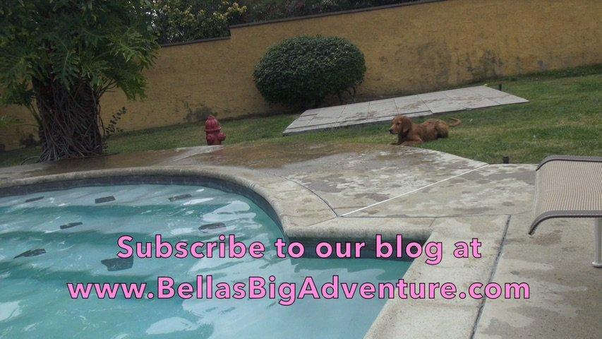 #puppies #Swimming Lessons!  #dogs #dog #puppy #USA  #water #America #travel #journey #Bellas_Big_Adventure #myfriendbella #animals #pets<br>http://pic.twitter.com/1YNUxl1dG5