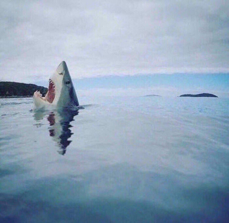Impresionante foto de un tiburón pisando una pieza de Lego:
