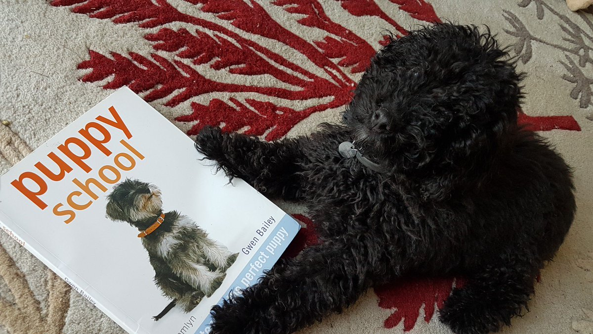 @HearingDogs puppy Rae has been busy doing his homework over the weekend 😁  #MondayMotivation