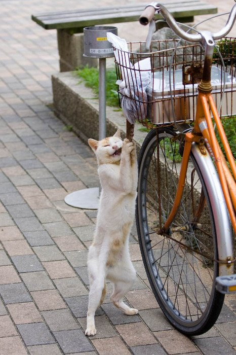 チャリのカゴから直接タコの足を食う猫