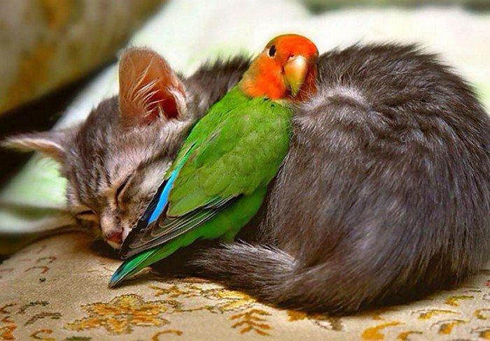 Kitty: \'Hug me hug me hug me\' ❤️❤️❤️ #cuddle #animals #cats #cute