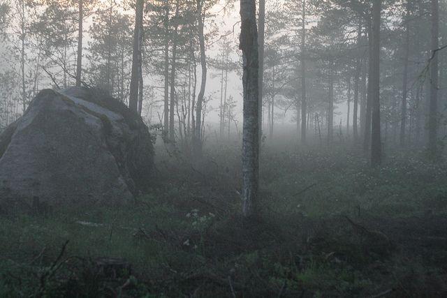 #CO2: Le mensonge des États membres sur leurs #forêts irrite la #Commission  http:// buff.ly/2nZoX32  &nbsp;  <br>http://pic.twitter.com/iA3ZcOwxqF