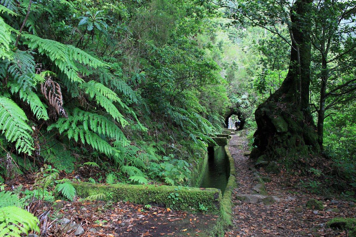 Les &quot;Levades&quot;, les rutes de Senderisme pels canals d&#39;irrigació a #madeira Demà dimarts en parlarem a @radiosio #agramunt <br>http://pic.twitter.com/WXK2YCK1ia