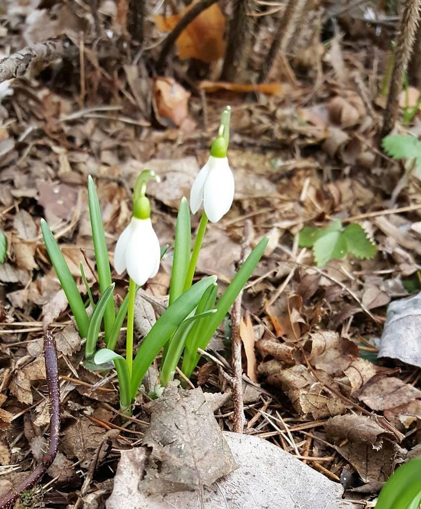 Spring #kevät #spring #seasonsoffinland #thisisfinland #suomi #finland #ig_finland #flow…  http:// ift.tt/2oqBCbg  &nbsp;  <br>http://pic.twitter.com/hPJ6O4FqZV