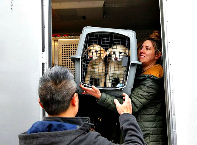 More than 40 dogs were saved from being killed to be used as food in South Korea.