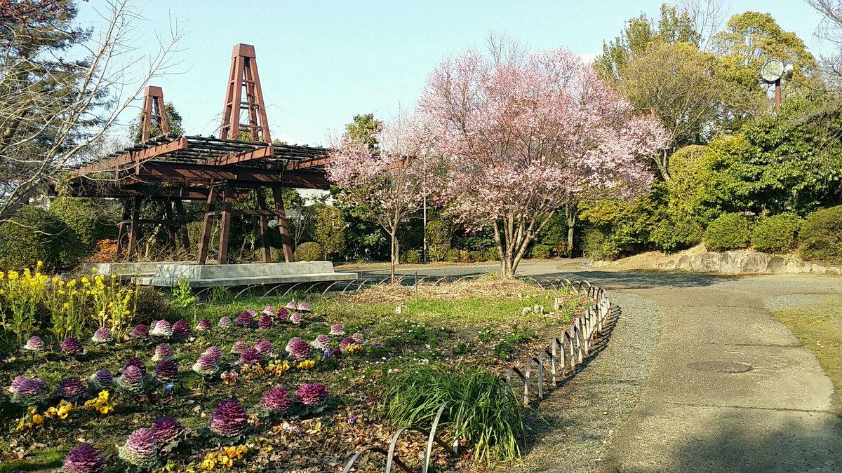 天理よろづ相談所の東側にある公園の桜が綺麗に咲いていました。 #天理 #天理市 #天理系 #天理よろづ相談所 #桜 #スマホ撮影 https://t.co/eUG2MZQIor