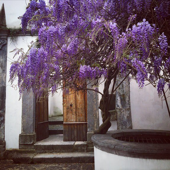 The #wisteria beautifully falling over the #wishingwell @palazzomilano in Nocera Inferiore #italia  #travel #exploring #newadventures <br>http://pic.twitter.com/0O4NSGrgfe