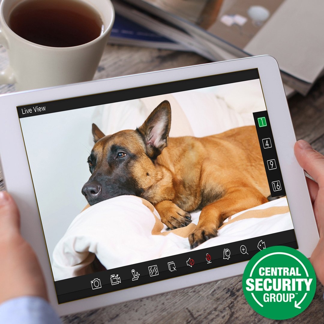 See how to easily protect your family, property, and pets with #HomeSecurity cameras:  http:// ow.ly/SVa630acD1n  &nbsp;   #smarthome<br>http://pic.twitter.com/KGyR619BwJ