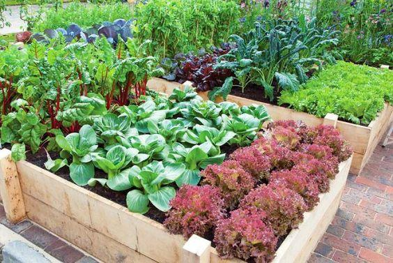 Be your own farmer's market this spring! How to grow your own vegetable garden at home: https://t.co/z6mou0tjOl https://t.co/yYImMmxGFQ
