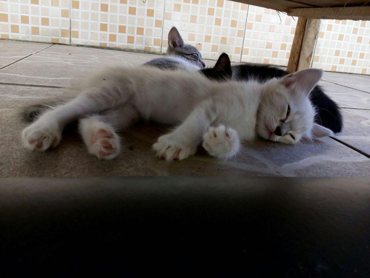 ALOW SALVADOR Três gatas lindas de +/- dois meses disponíveis pra adoç...