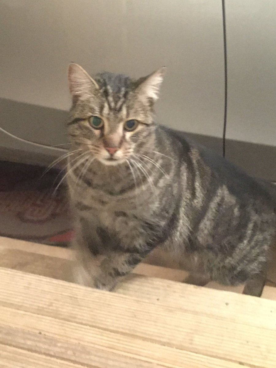 "Libby Boothman on Twitter ""found a lost cat in my garage near"