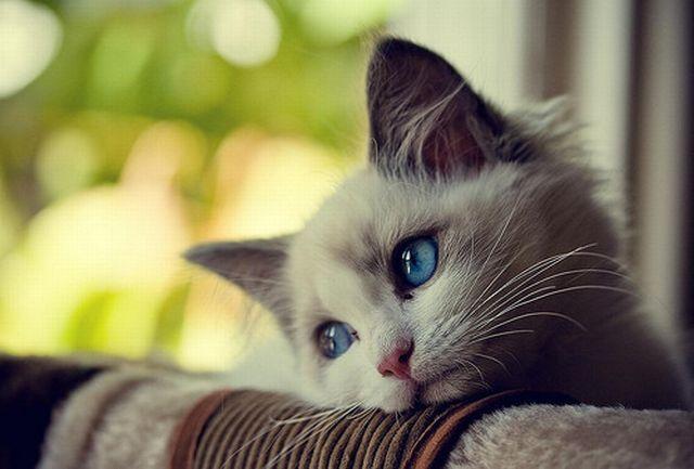 rt please🎈 💕 #markno 💕 #มาร์คกลัวแมว 💕https://goo.gl/uxbvYE 💕 - เมื่อแมวแอบน้อยใจ -  @Fiction_nct @NCT_FIC  @NCTDREAMFiction
