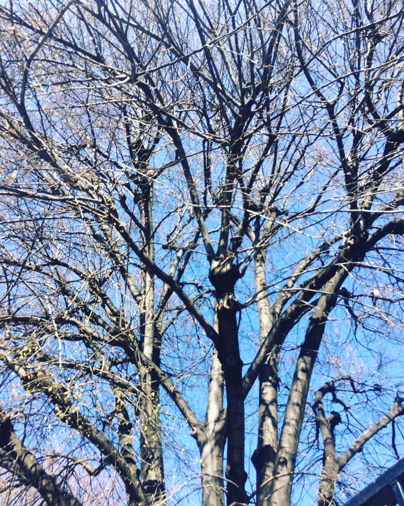 Bye bye l&#39;hiver    A toi de jouer le printemps, fleuris-donc tous nos arbres  #bye #hiver2017 #welcome #printemps2017 #life #bluesky<br>http://pic.twitter.com/C3Z25QEG6M
