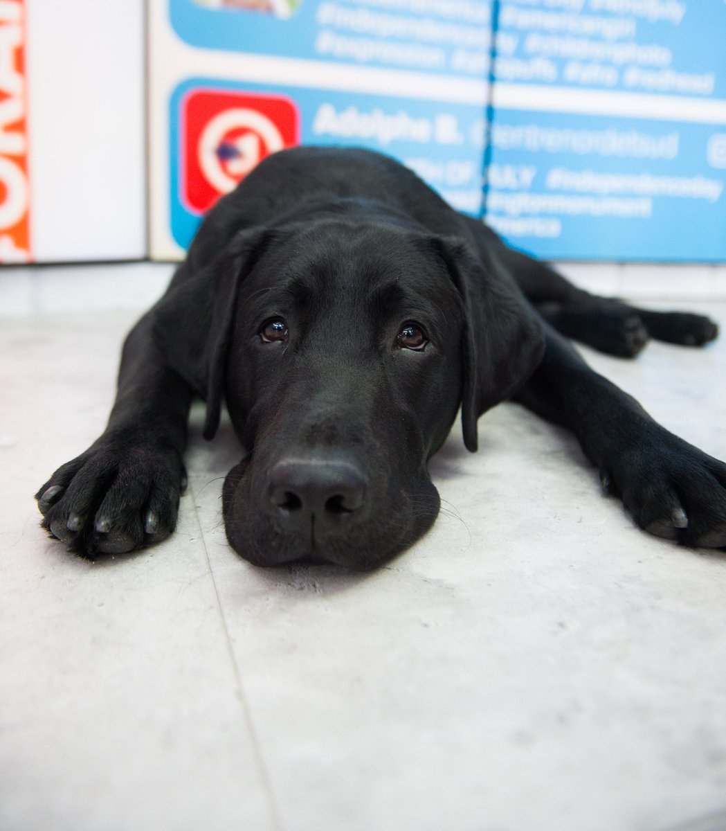 This chilly weather makes me super sleepy! #TODAYPuppy