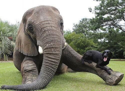 Best friends 🐘🐶💕