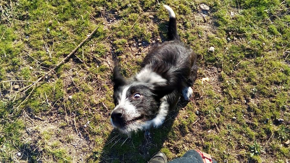 #adoption Avec Booster, vous êtes sûrs de ne pas vous ennuyer! #chien #AdoptDontShop #bordeaux #gironde #AmourDeChien #doglovers #laSPA<br>http://pic.twitter.com/Bd0Hzxytsm