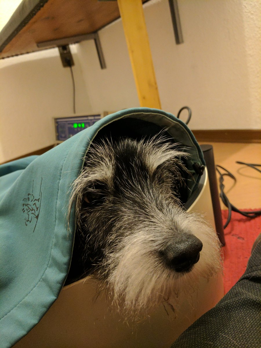 Je oller desto doller ! #hundesenior #terrier #terriersoftwitter #dogsoftwitter #hundephysio #dogs<br>http://pic.twitter.com/1FhCKqwKw3