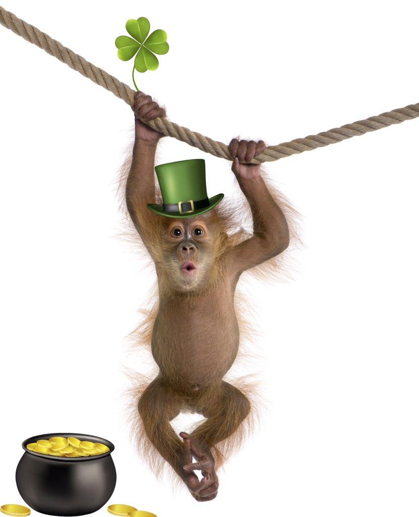 Monkey Remix (@monkeyremixpool) | Twitter