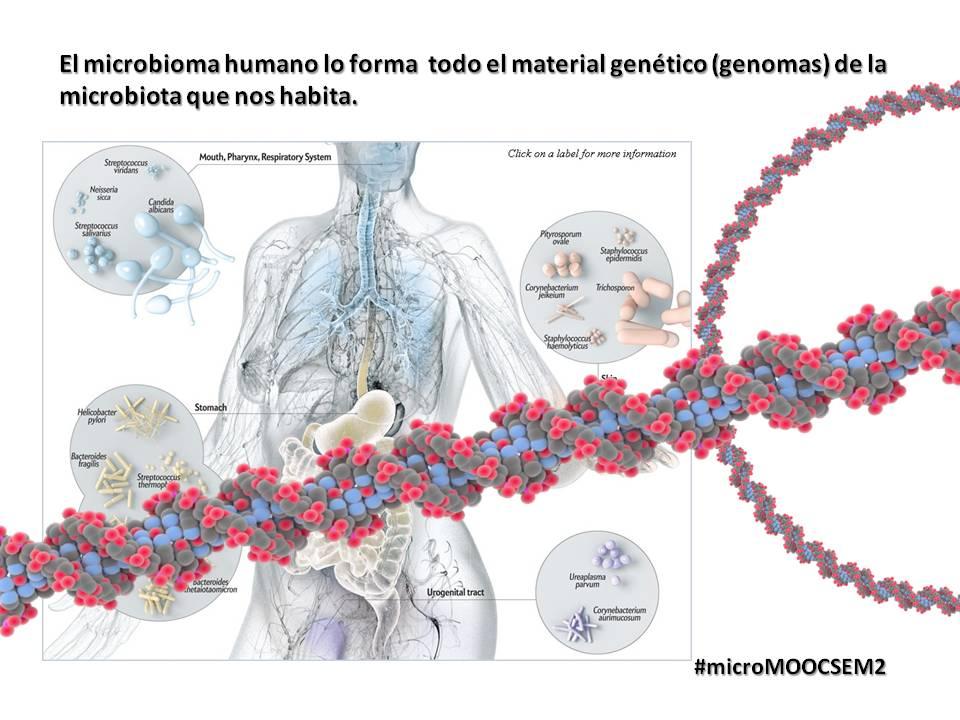 El microbioma humano lo forma  todo el material genético de la microbiota que nos habita  #microMOOCSEM2 https://t.co/STDZyP6JQ4