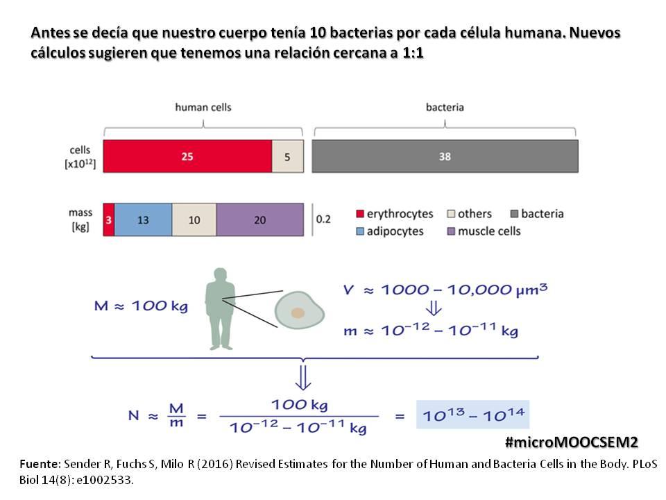 Nuevos cálculos sugieren que tenemos casi el mismo número de bacterias por cada célula propia, aún sigue el debate  #microMOOCSEM2 https://t.co/EKvCnL7dYb