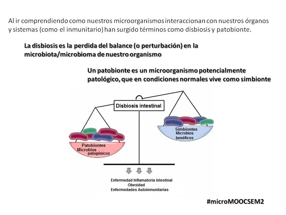 Al estudiar  los microbiomas, han surgido nuevas concepciones y términos como  Disbiosis y Patobionte #microMOOCSEM2 https://t.co/vWVc4JxqzU