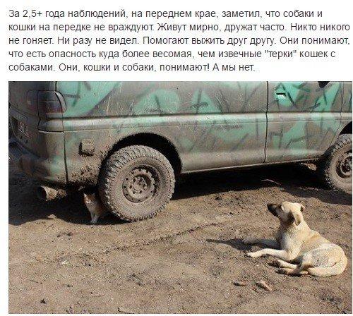 Террористы на оккупированном Донбассе проводят учения, во время которых стреляют по подконтрольной Украине территории, - пресс-центр штаба АТО - Цензор.НЕТ 9255