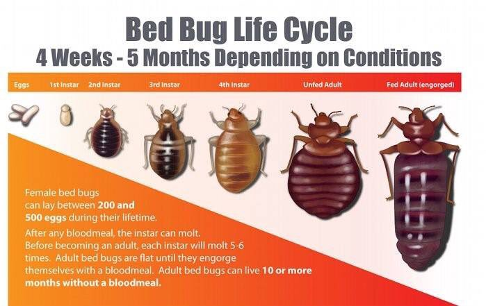 Pest Busters Bahrain On Twitter Good Night Dont Let The Bed Bugs