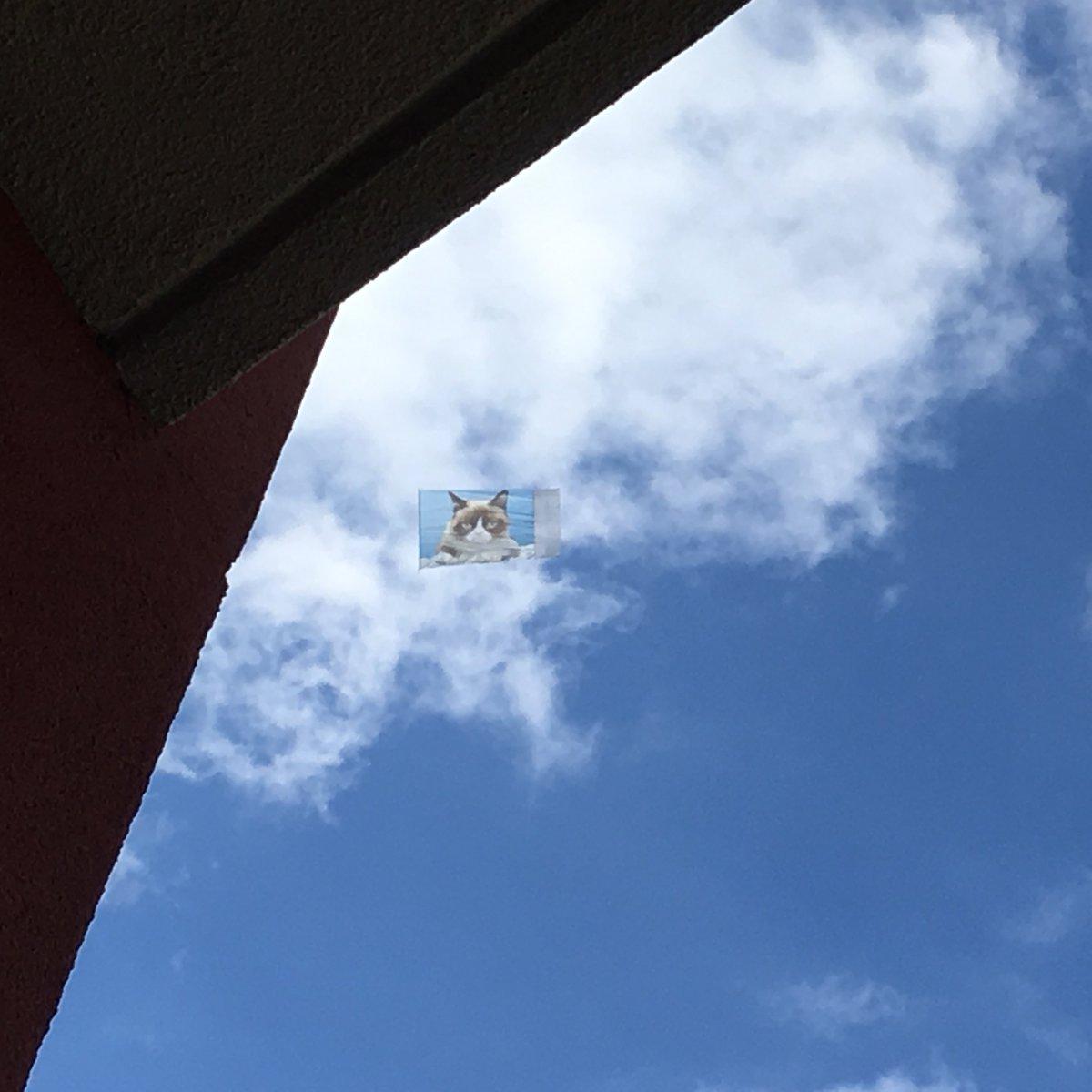 Look what is flying above #Austin right now for @sxsw !!  #grumpycat @RealGrumpyCat !!