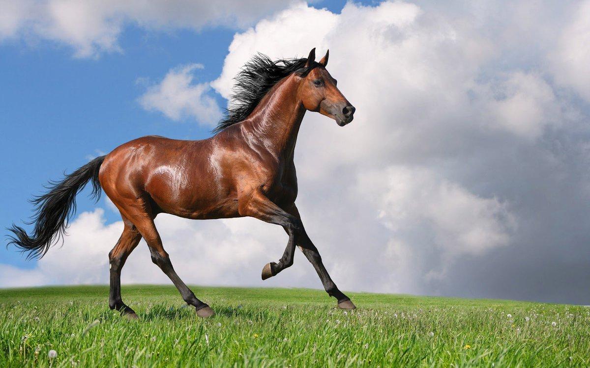 En imagina todo es posible, incluso caballos en leasing, aquí te decimos cómo 👉 https://t.co/JhjYh4FIE7 🐎   #BuenViernes #ConfíaEnNosotros https://t.co/M2kvdKBbob