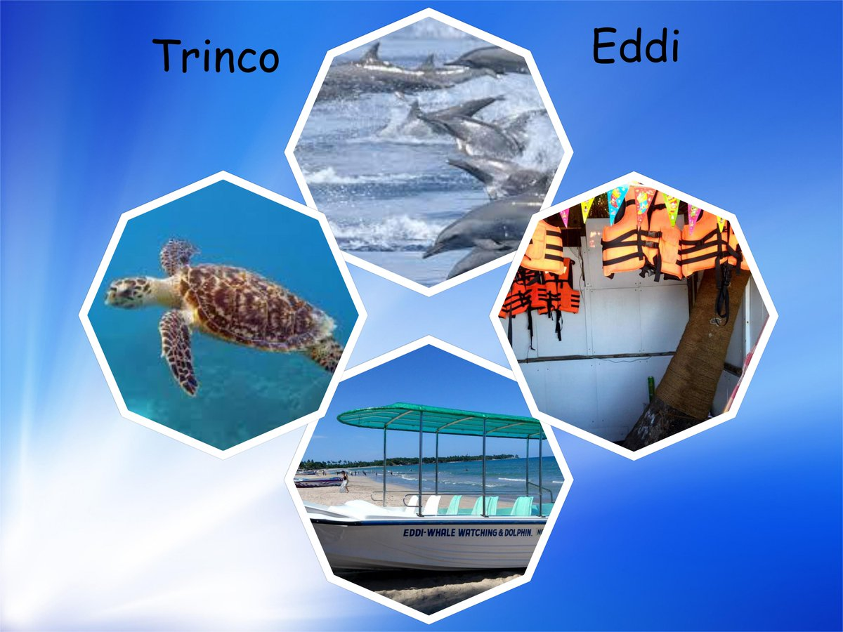 TRINCO EDDI photo
