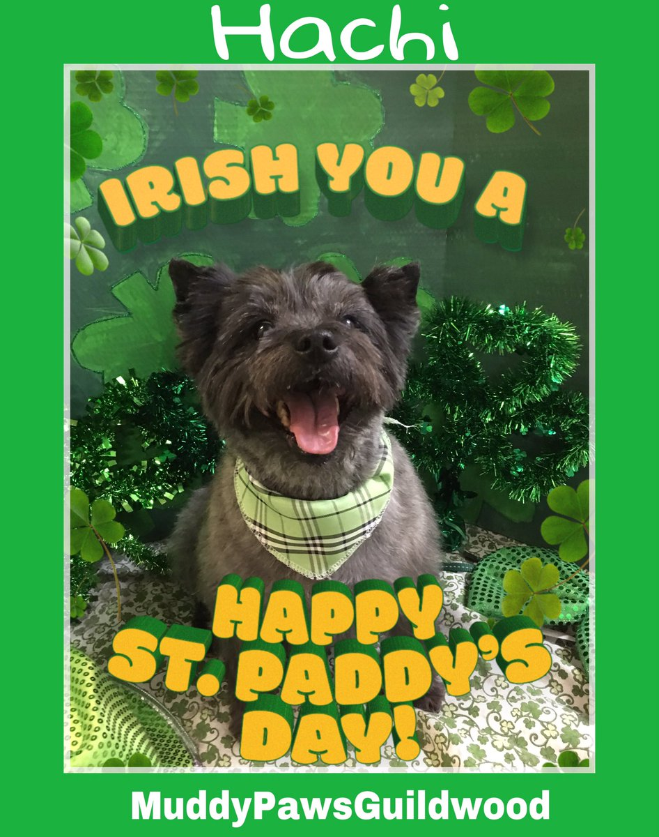 FABULOUS FURBABIES #petgroomer #dogfriendly #Guildwood #animallovers #pets #dogs #doglovers #scarboro  #doglife  #cats #StPatricksDay p<br>http://pic.twitter.com/FnTFuIRfRy