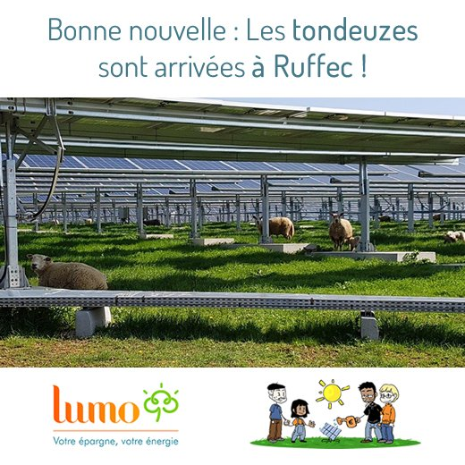 Bonne nouvelle de Ruffec,  les TONDEUSES sont arrivées!  #solar shelters happy #sheep  #EnR #ObligationVerte  http:// bit.ly/LumoRuffec  &nbsp;  <br>http://pic.twitter.com/KrOKv5Z3CD