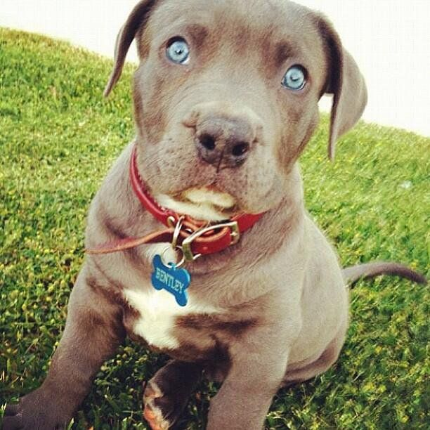 Look at those eyes. h