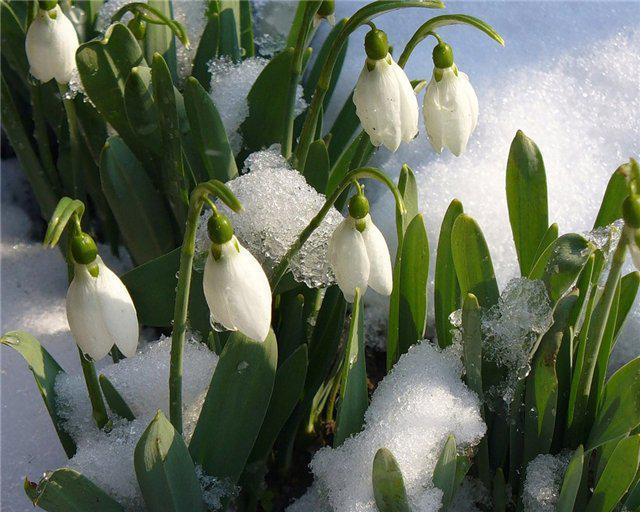 Картинки весна