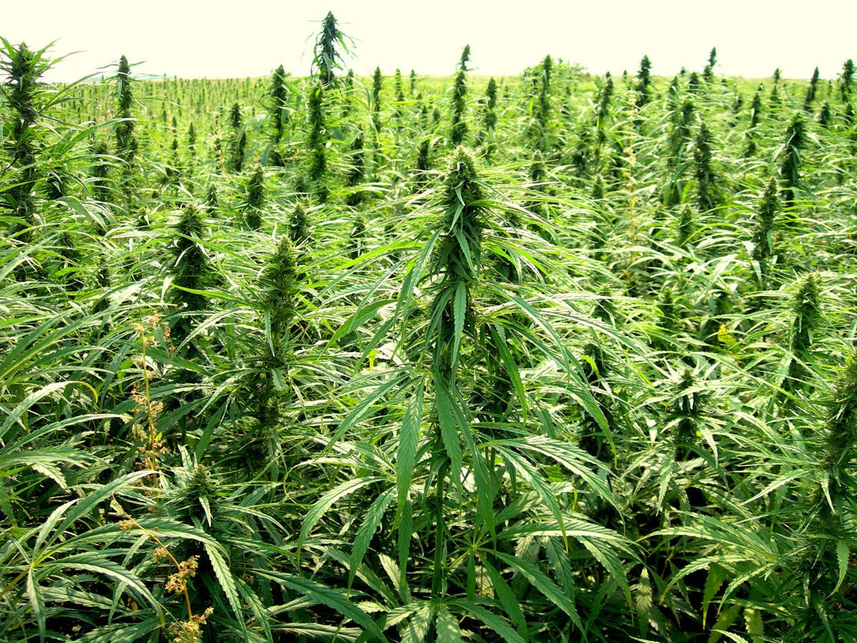 Hemp Bill Advances In Arkansas Legislature