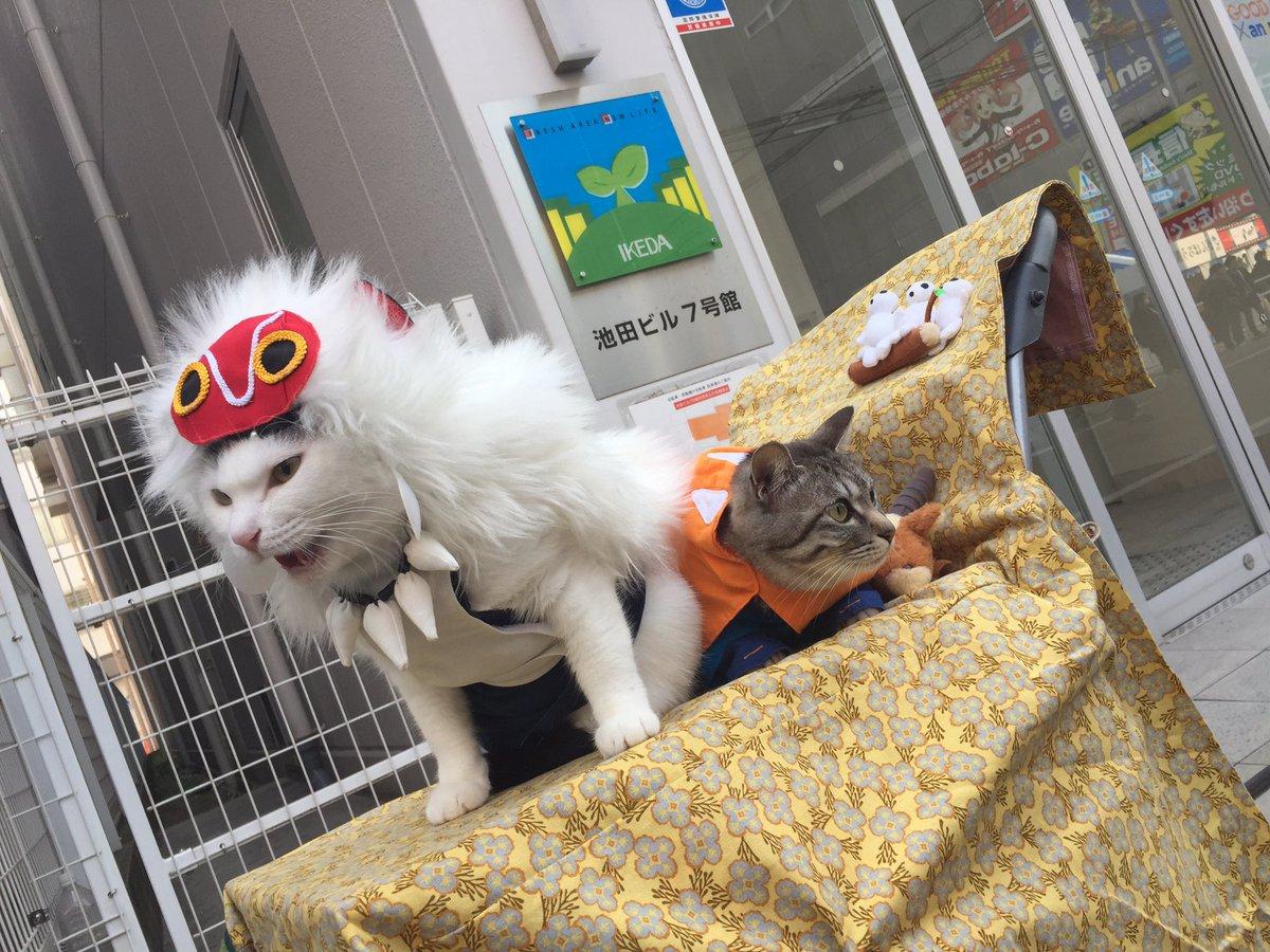 ストフェス【速報】