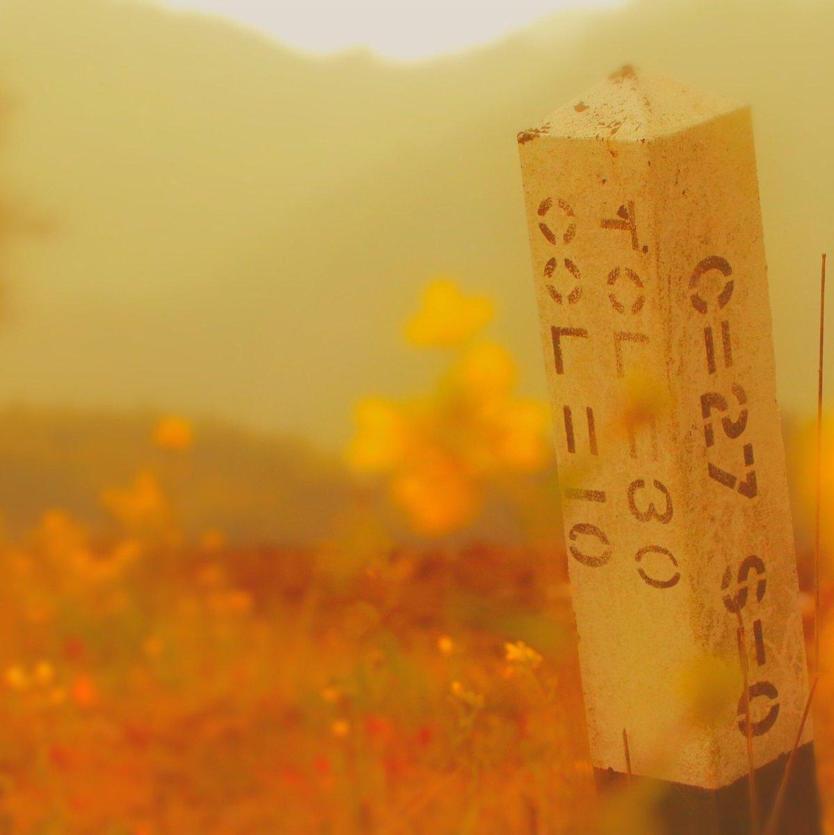 「春の線路際」  #旅 #旅行 #trip #travel #春 #Spring #鉄道風景 #鉄道写真 #ゆる鉄 #鉄子 #ファインダー越しの私の世界 #写真好きな人と繋がりたい #photography #photographer #ローカル線 https://t.co/rSlEOWVYxz