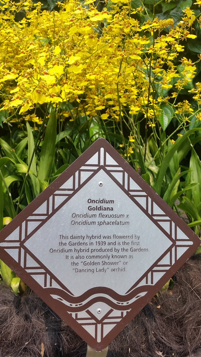 Stumbled on @realDonaldTrump \'s favourite flower in the Singapore Botanical Gardens. #WaterSportsGate