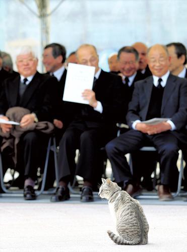 東日本大震災慰霊碑の除幕式に、ネコが乱入してきたニュース、もちろんネコもかわいいんだけど、思わぬお客さんをみんなで見守る参加者のおじいさんたちの表情も、本当にやさしそうな微笑みしててかわいすぎる