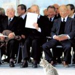除幕式に猫のお客様wそれを見守るやさしいお客様にほっこりする