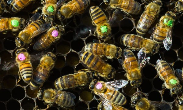 Antibiotic overuse might be bad for bees https://t.co/tOG0QVIPS7 https://t.co/COImPH6AGN