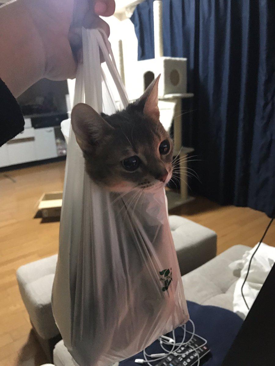 うちの猫が出てこない pic.twitter.com/6Tki5qAD4z