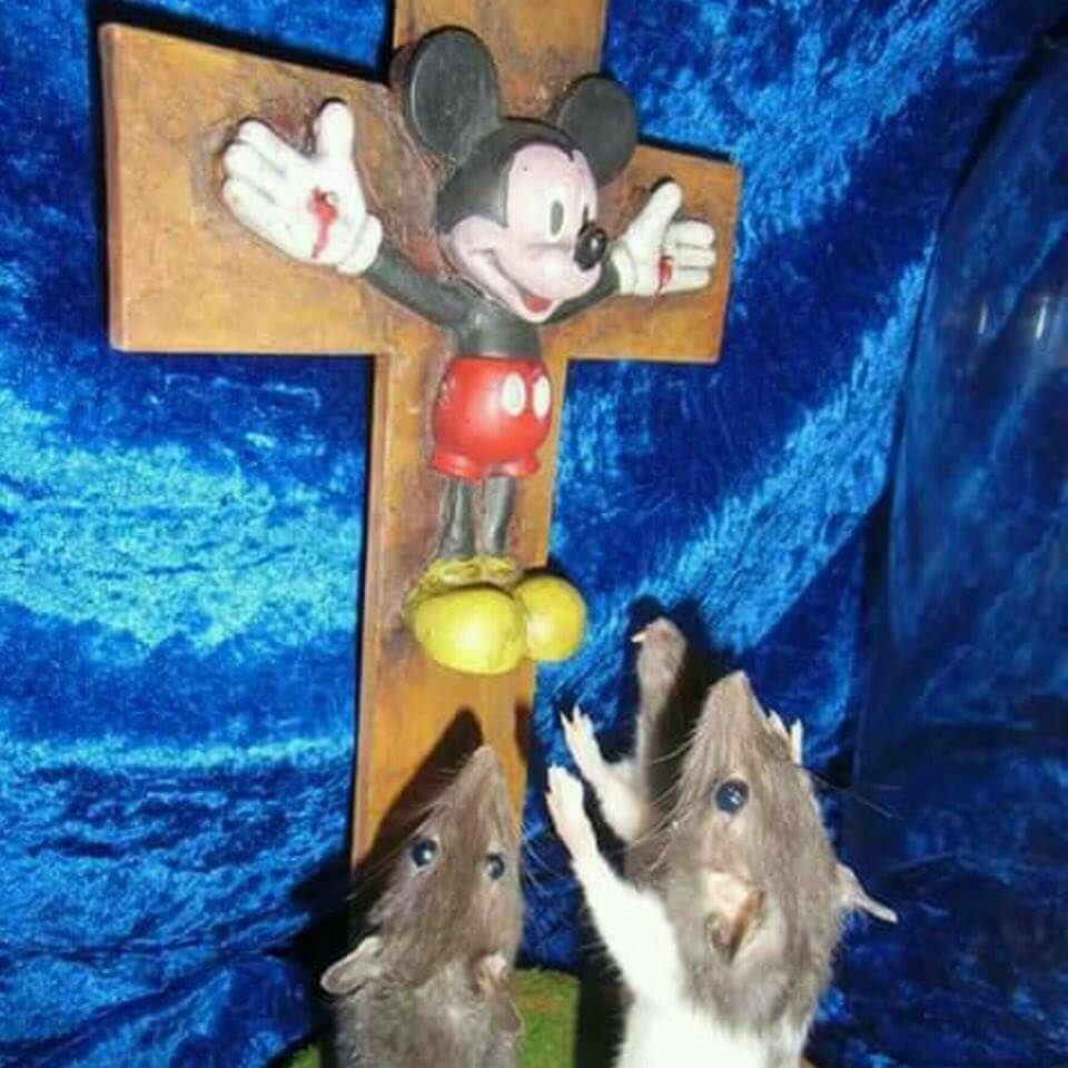 """Cursed Images On Twitter: """"cursed Image 1228…"""