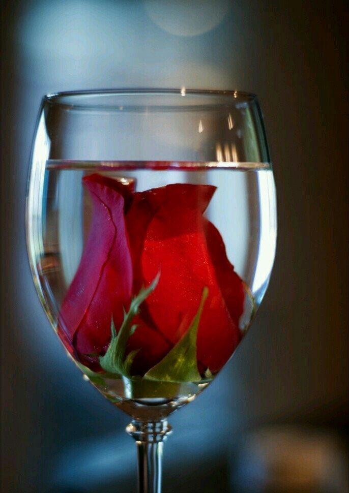 красивые картинки бокал с розой изображения такими