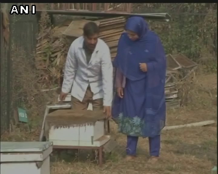 Srinagar (J&K): New technologies introduced by Sheri Kashmir University of Agriculture, Science & Technology help give Apiculture a boost