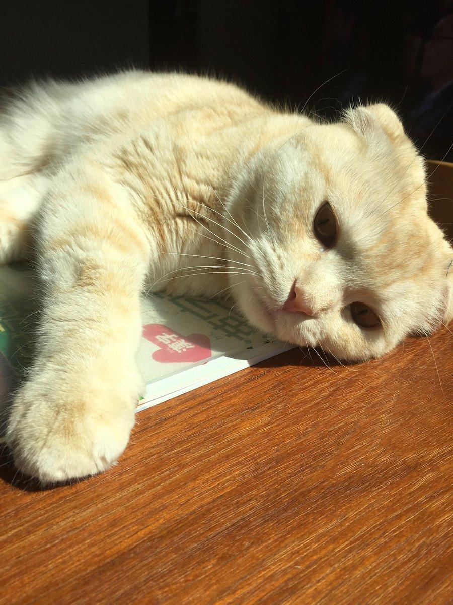 ノンビリしている息子から「ネコのせいで漢字ドリルできない」という言い訳をきいて、  「ネコのせいにするな!」と言ったけれど、  現場を見たら本当にネコのせいだった。